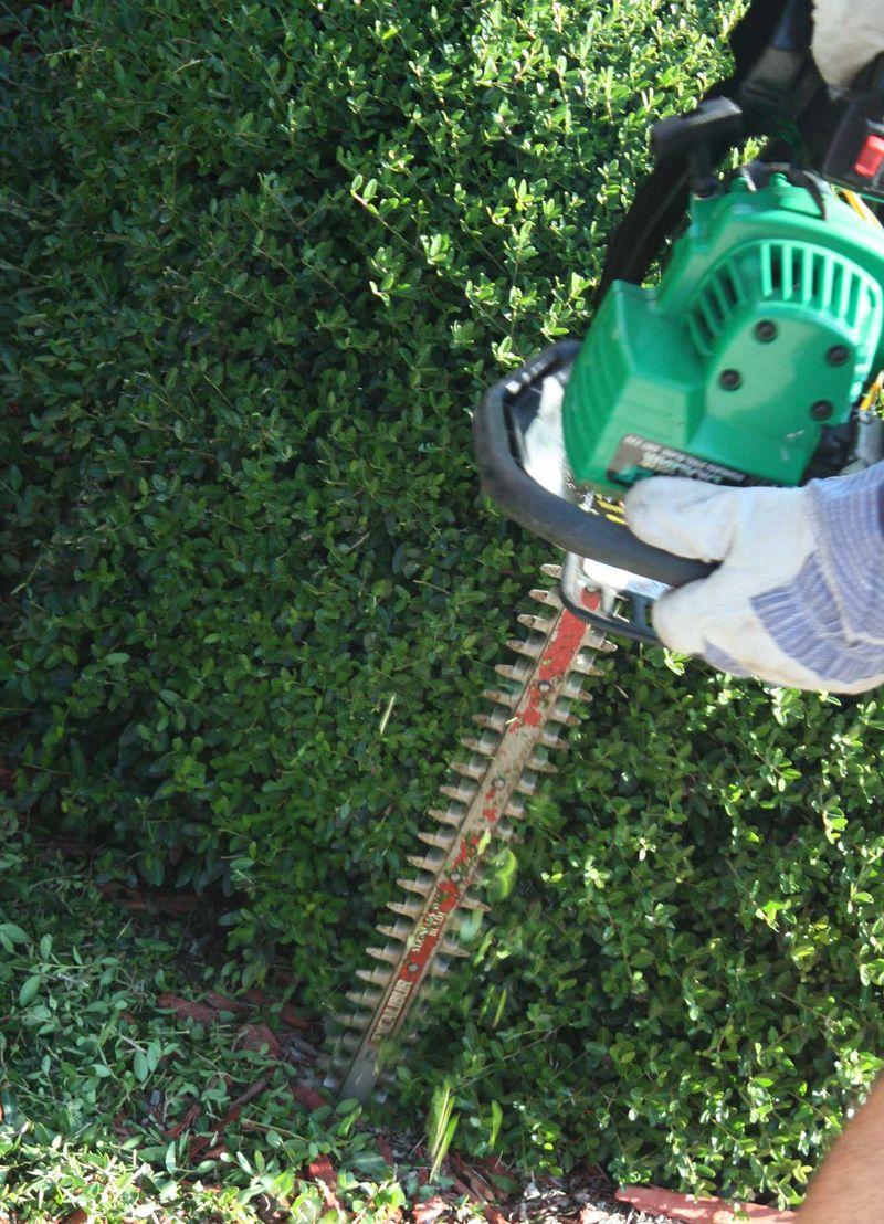 Hedge-trimmer-edited