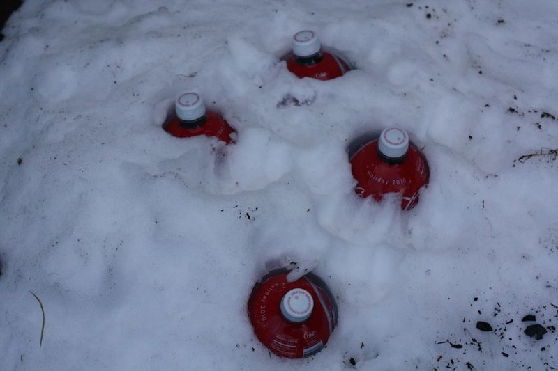 Coke in snow