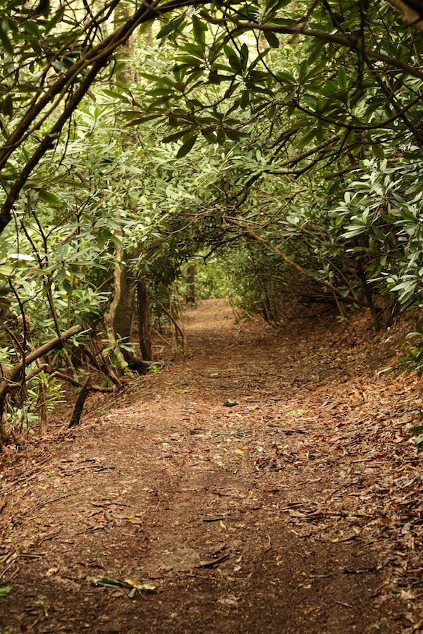 Forest hallway