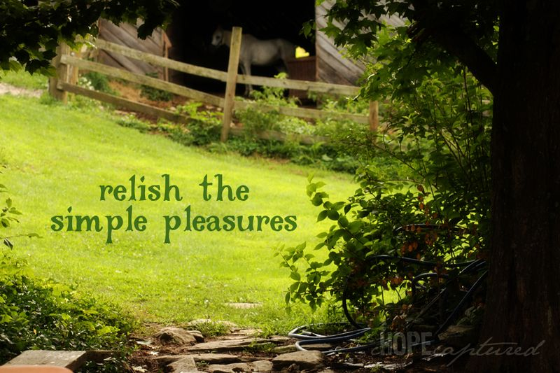 Simple-pleasures-web
