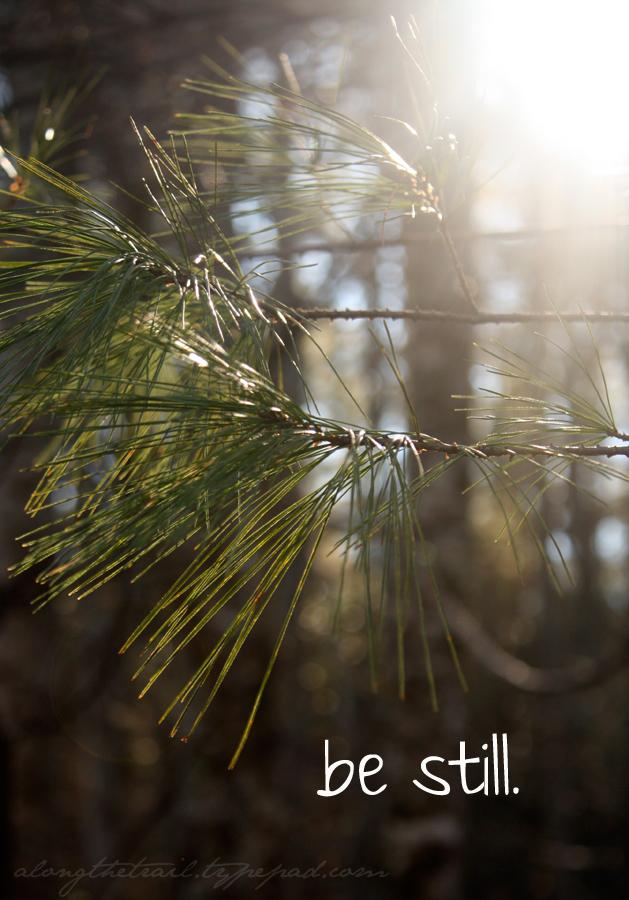 Be-still-pine-branch