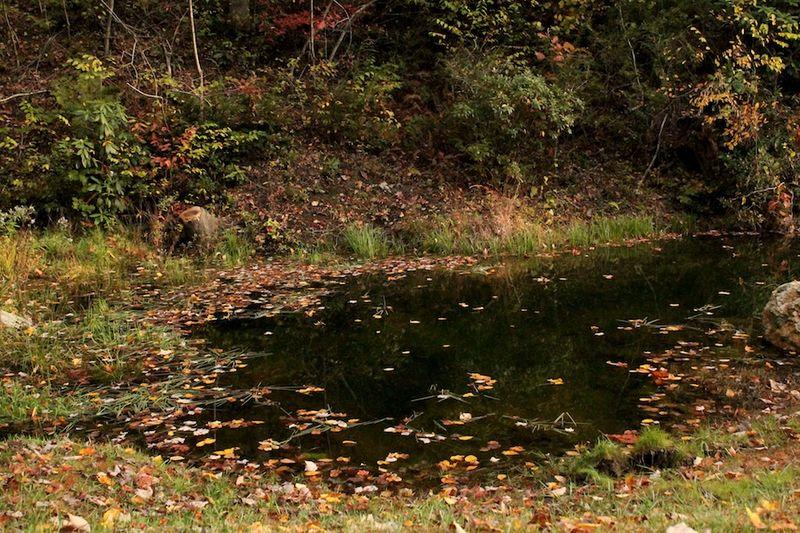 Charleys pond