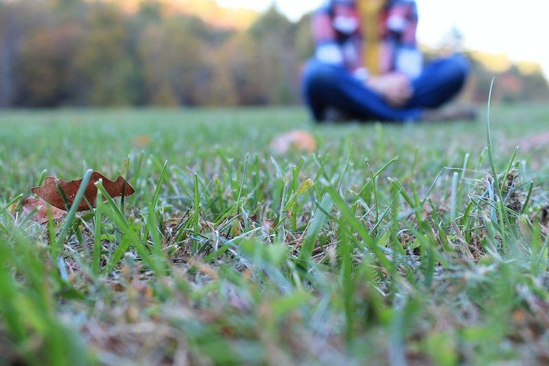 Charleys grass