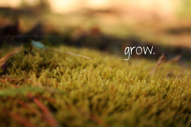Grow-moss