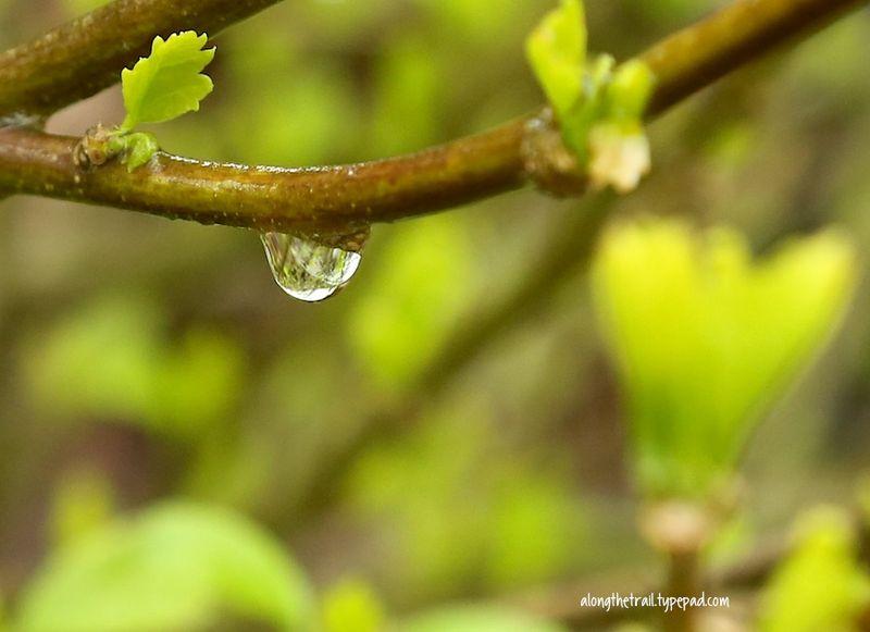 Rainy Day Rain Drop
