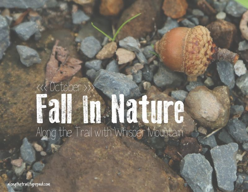 Fall In Nature Blog Theme
