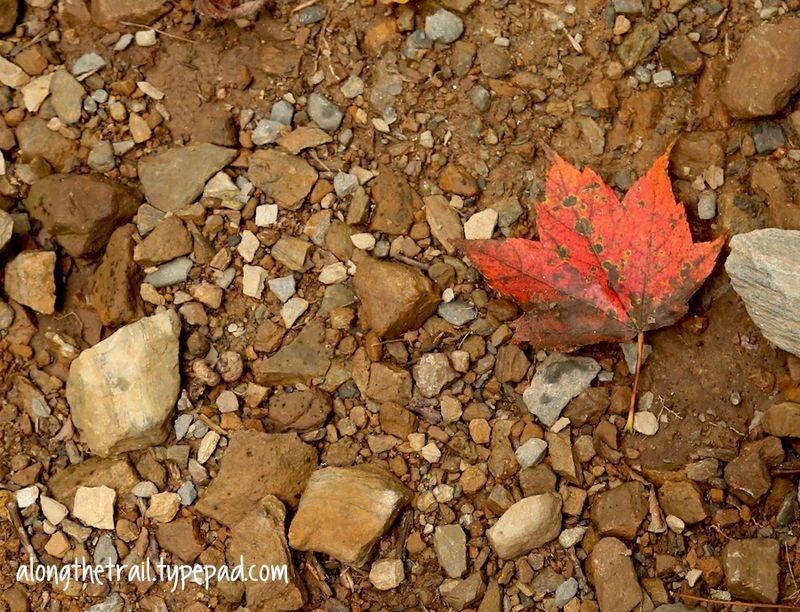 Fall In Nature Leaf