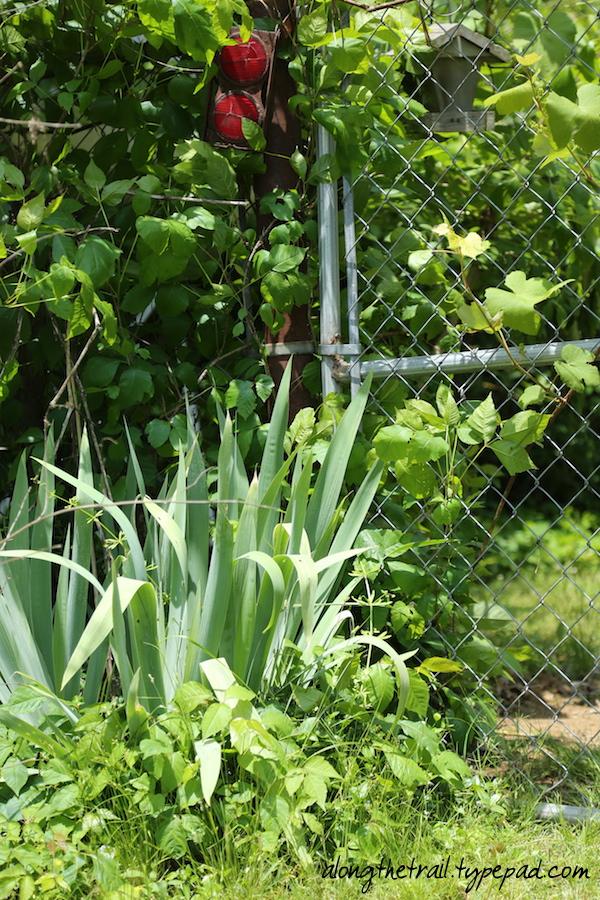 Green Fenceline Along the Trail