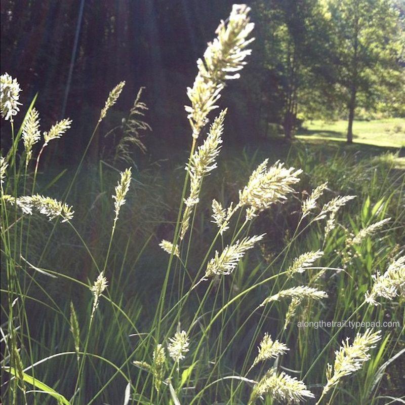 Grassy field in the sunlight