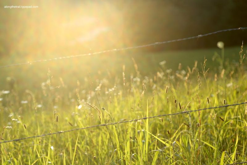 Sunshine on fields of Grass