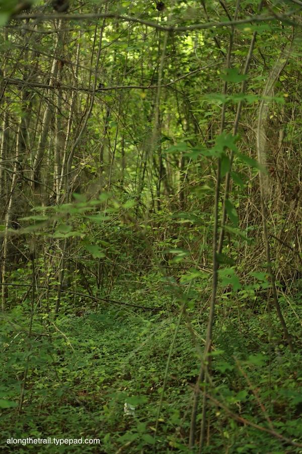 Jungle of a trail